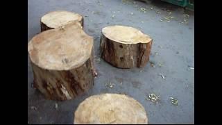 как узнать сколько лет дереву?