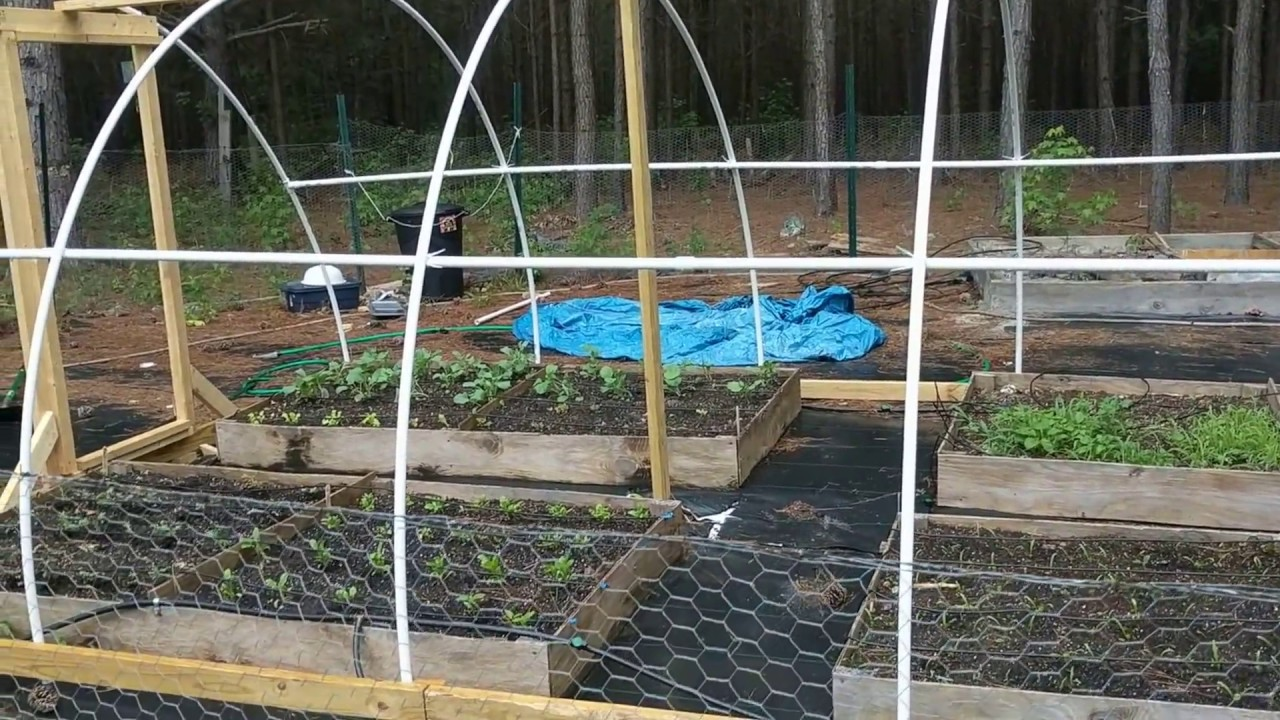 DIY PVC Greenhouse/Poly Tunnel Greenhouse Project (first ...