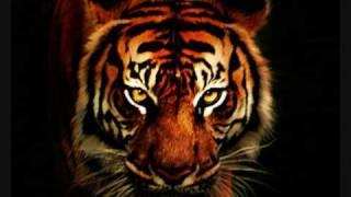 Techno Trance - Eye of the tiger