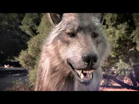 Вопрос: Волк. Какие мифы, легенды, исторические факты?