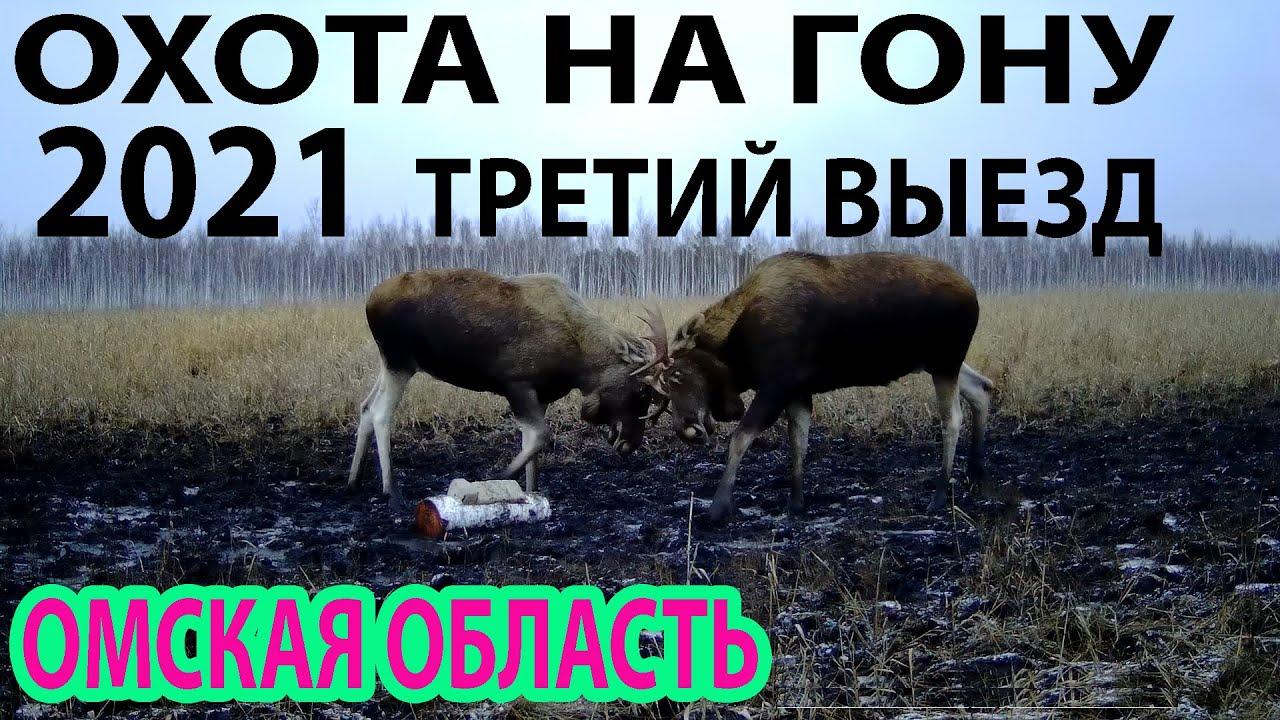 Охота на гону 2021 Третий выезд Омская область