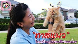 quot-ทาสแมว-quot-ขอเสียงคนรักแมวหน่อย-พี่ฟิล์ม-น้องฟิวส์-happy-channel