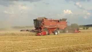 Żniwa 2014 !!! Harvest 2014 !!! Ernte 2014 !!! / Case Axial-Flow 6130 i 1680 - Spudłów