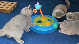 Cat cute fun videos, mischievous kittens, the funny cat 2020 # 10