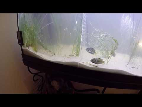Dallas's Fish Channel - Clearing the fish tank with plants