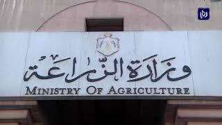 """""""الزراعة"""" تنفي وجود متبقيات مبيدات في البطيخ المعد للتصدير"""
