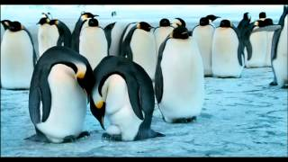 Gambar cover La marcia dei pinguini - Trailer