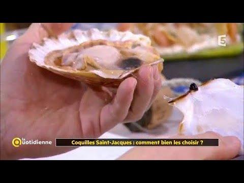 Coquilles Saint-Jacques : comment bien les choisir ?