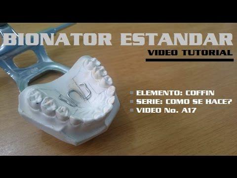 Bionator Estandar - Resorte Coffin (1/4)