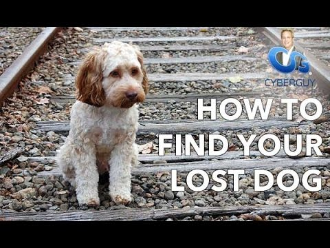 Ask Kurt: How To Find Your Lost Pet