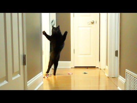 Funny Crazy Cats!