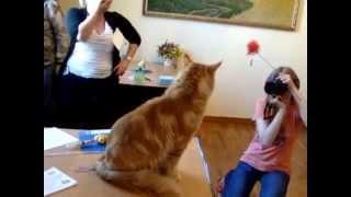 Fenix Big-Cats М.Литвина титул CACM Минск 6 июня 2015