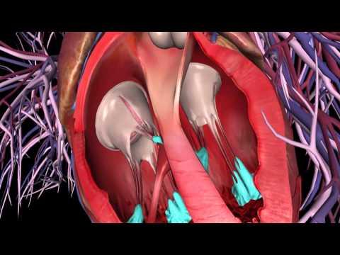 GIẢI PHẨU CƠ THỂ: Cấu tạo tim cho các sinh viên đây  (Human Anatomy Atlas)