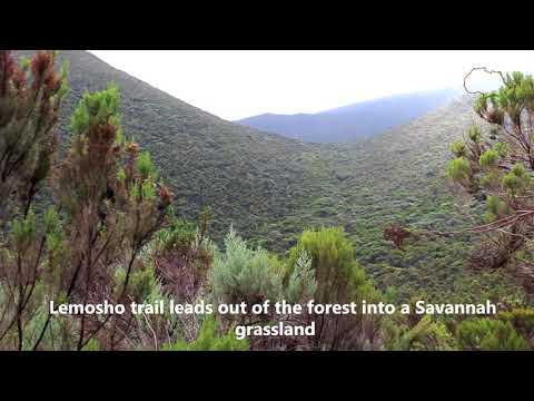 LEMOSHO ROUTE OVERVIEW - LEMOSHO THE BEST ROUTE KILIMANJARO