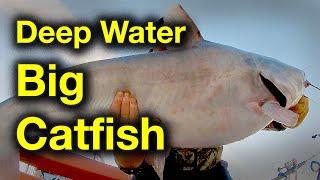 Big Catfish in Deep Water