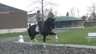 *****TOP moving 11 y old dressage GP prospect for sale (second part video)
