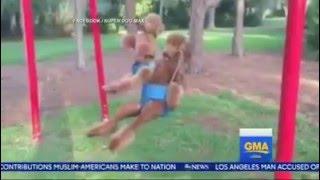 dogs on swings  สุนัขนั่ง ชิงช้า