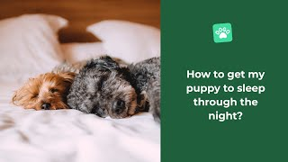 How to get my puppy to sleep through the night?