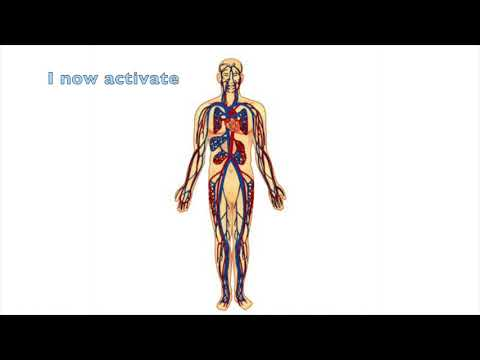 Healing Your Cardiovascular System and Mother Earth -  Body Systems Series   Part 1