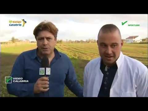 InfoStudio il telegiornale della Calabria notizie e approfondimenti  - 21 Ottobre 2019 ore 13 30