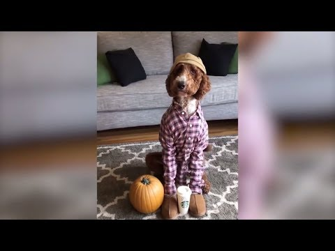 Funny Cats and Dogs Vines Compilation