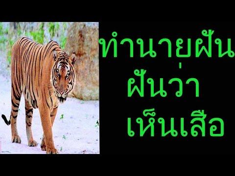ฝันเห็นเสือ (พร้อมเลขเด็ด)