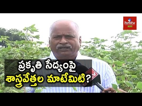 Scientists Research on Natural Farming | Cotton Cultivation | hmtv Agri