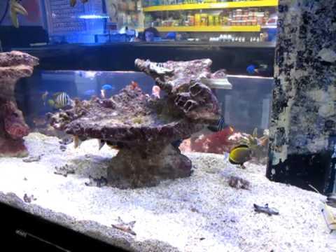 I miei acquari marini youtube for Acquari marini offerte