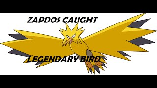 ZAPDOS, RAIKOU, SUICUNE-How To Find and catch Legandary Pokemon-Project Pokemon:Roblox