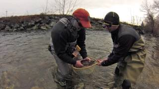 Winter Fly fishing, Asheville, NC