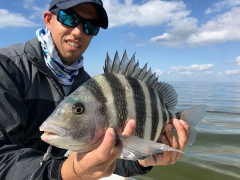 Winter Inshore Fishing In Florida -- Sheepshead Fishing And Spotted Sea Trout !