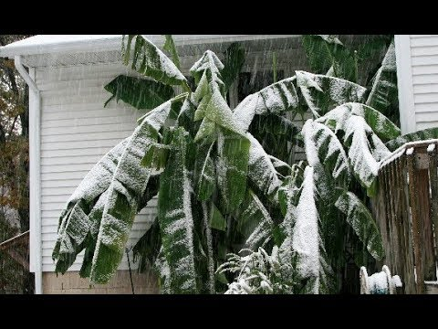 Global Cooling Rundown: Crop Reports and Unusual Spring Globally | Grand Solar Minimum
