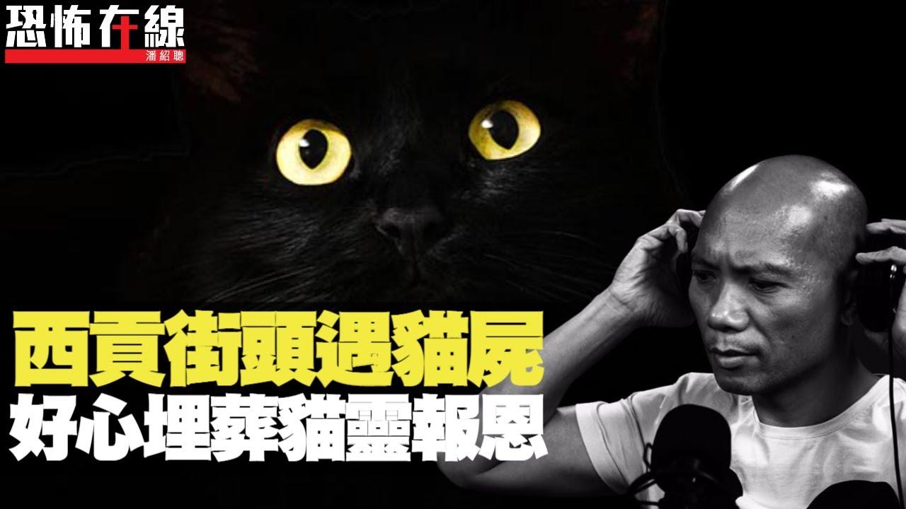 西貢街頭遇黑貓屍,好心埋葬貓靈報恩!大聖乒乓遇仙鬼神佛即響!(恐怖在線重溫 第2413集)