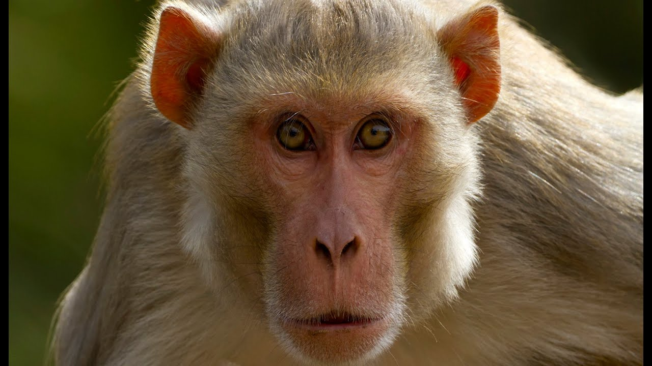 monkey: animals for children kids videos kindergarten preschool