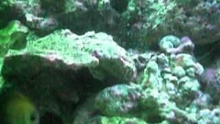 250 Gallon Saltwater Fish Tank Aquarium, Lion Fish, Tangs, Clown Fish