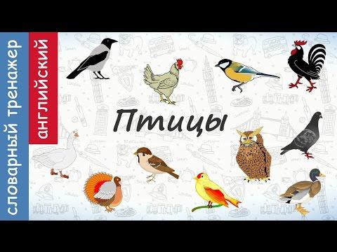 Как по английски птицы