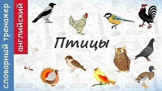 Птицы на английском. Видеотренажер от crazylink.ru