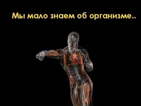 Анатомия строение мышц человека. Принцип работы мышц и их виды
