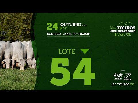 LOTE 54 - LEILÃO VIRTUAL DE TOUROS MELHORADORES  - NELORE OL - PO 2021