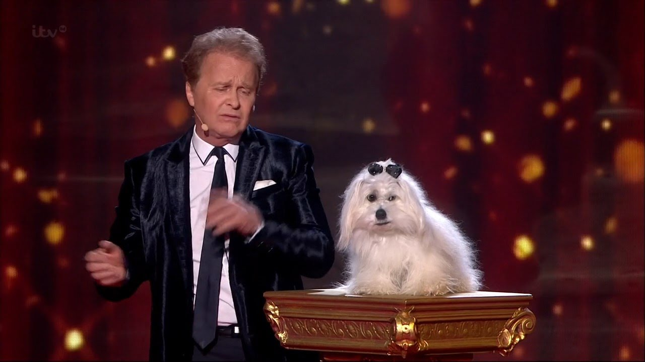 Britain S Got Talent Dog