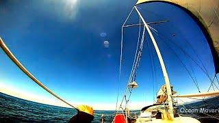 Single handed Sailing Oregon to California, Wild Dolphins - Sailing Aulani Aloha 7