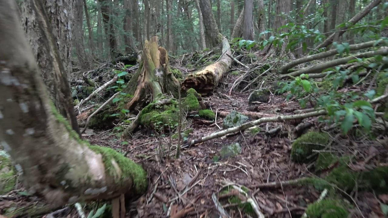 Aokigahara 5  leftover footage