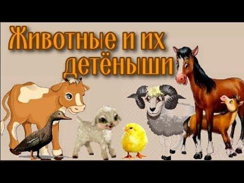 Развивающий мультфильм для самых маленьких. Животные и их детёныши.