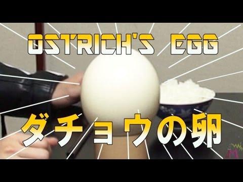 ダチョウの卵かけご飯でテーブル大洪水|The egg dish of an ostrich