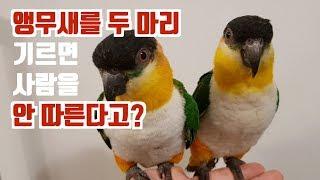 EP.02 [앵무새 키우기 QnA] 애완조 두 마리를 키우면 정말 사람과 멀어질까?