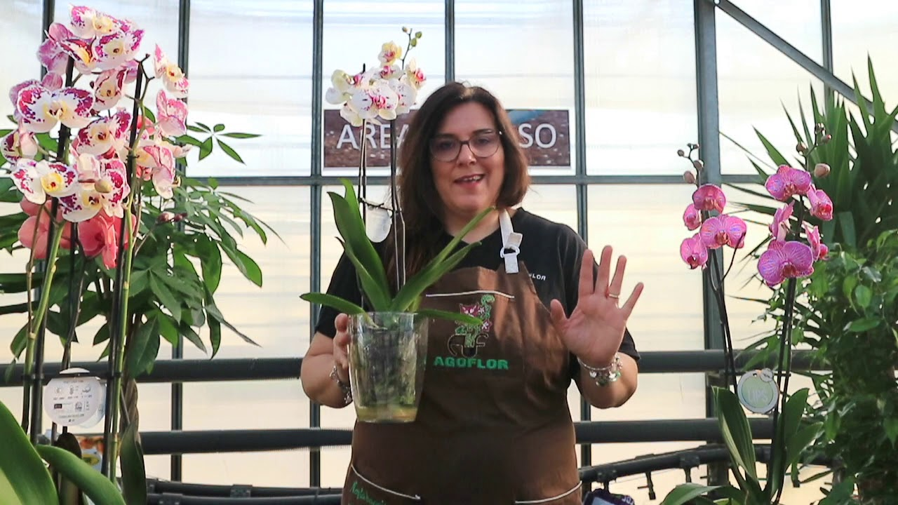 Download Come coltivare le orchidee