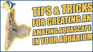 tips tricks for creating an amazing aquascape in your aquarium