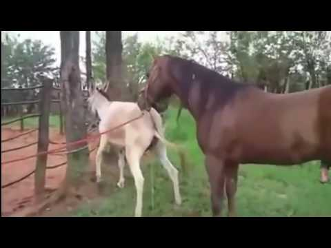 GOVT OFFICIAL in PVT. ANIMAL VID WTF - مثير الحيوانات from YouTube · Duration:  38 seconds