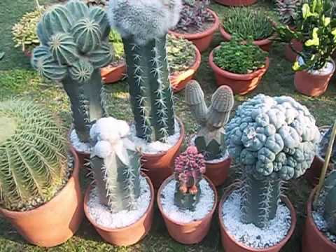 different type of cactus