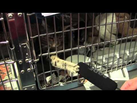 The Celia Hammond Animal Trust